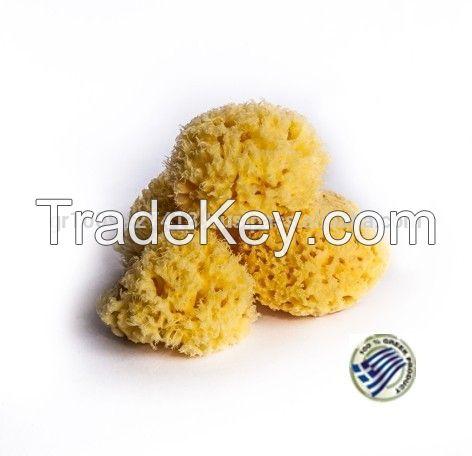 Baby Natural Sea Sponge