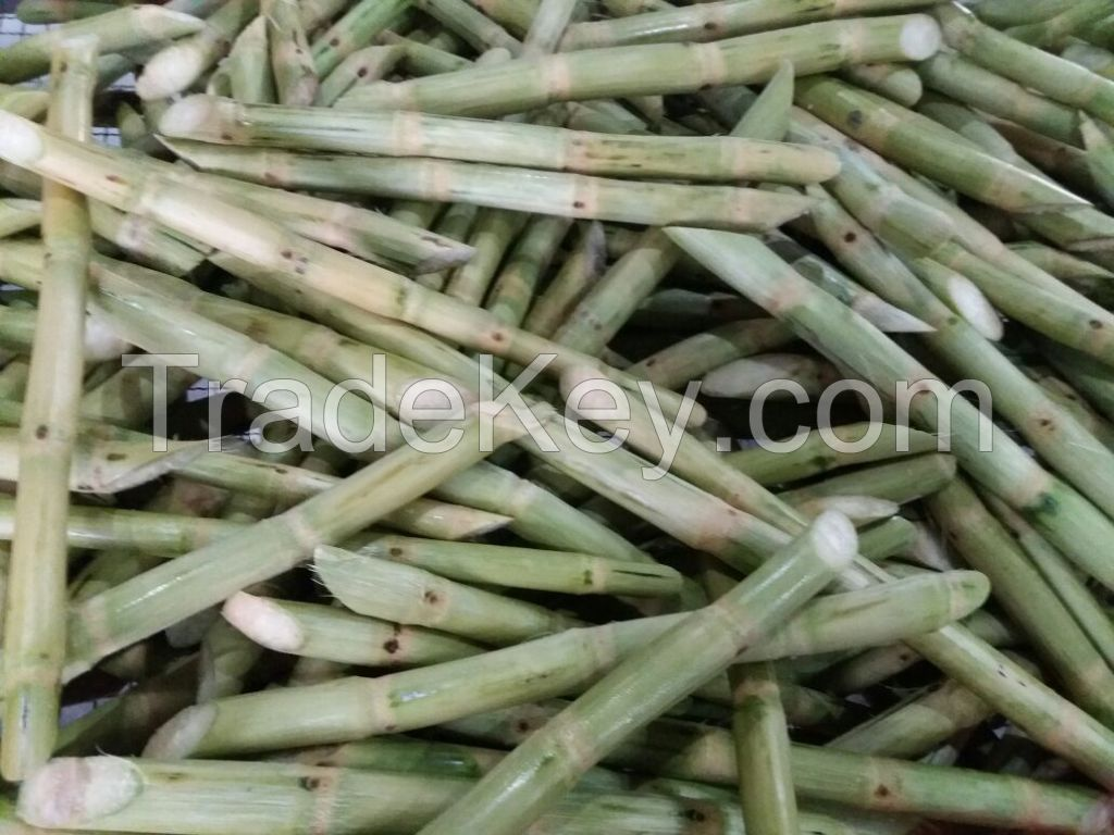 HIGH QUALITY FROZEN SUGARCANE FOR JUICE