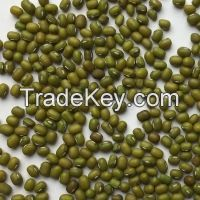 Sugar Beans  Kidney Beans Mung Beans Chickpeas Fresh Beans Lentils