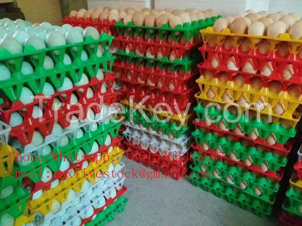 Plastic egg tray for chicken eggs duck eggs