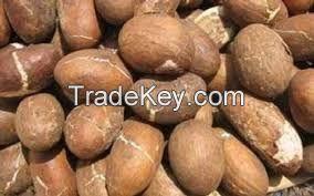 Bitter Kola (Garcinia Kola) Nuts