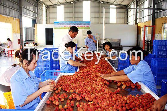 Fresh Lychee from Vietnam