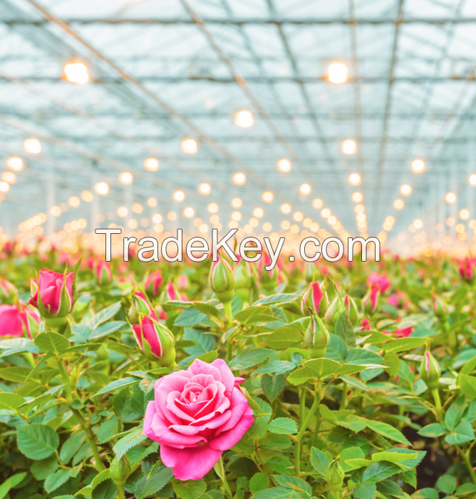 Flower Greenhouse Film
