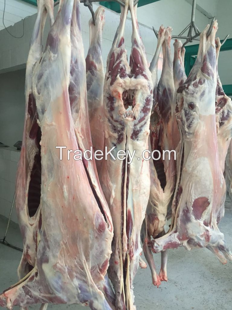 Fresh lamb meat