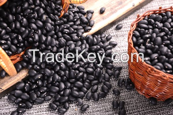 High Quality Black Bean Available