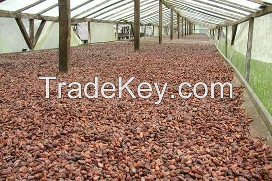 Quality Dried Cocoa Beans