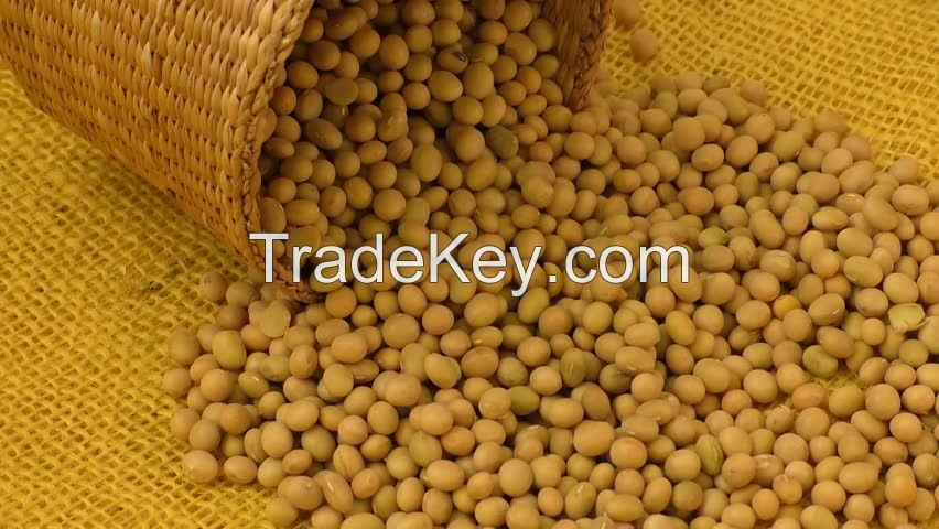 SoyBeans / SoyBeans Seeds for sale