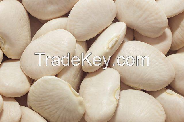 Large Quantity Lima Beans Supply