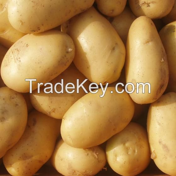 Fresh Potato, Potatoes , Spunta , Washed, Clean Potatoes For Sale