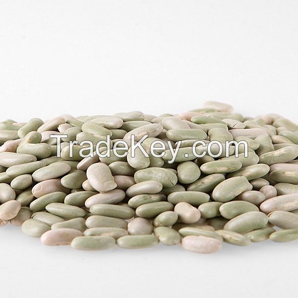 High quality Fayot (Flageolet) Beans
