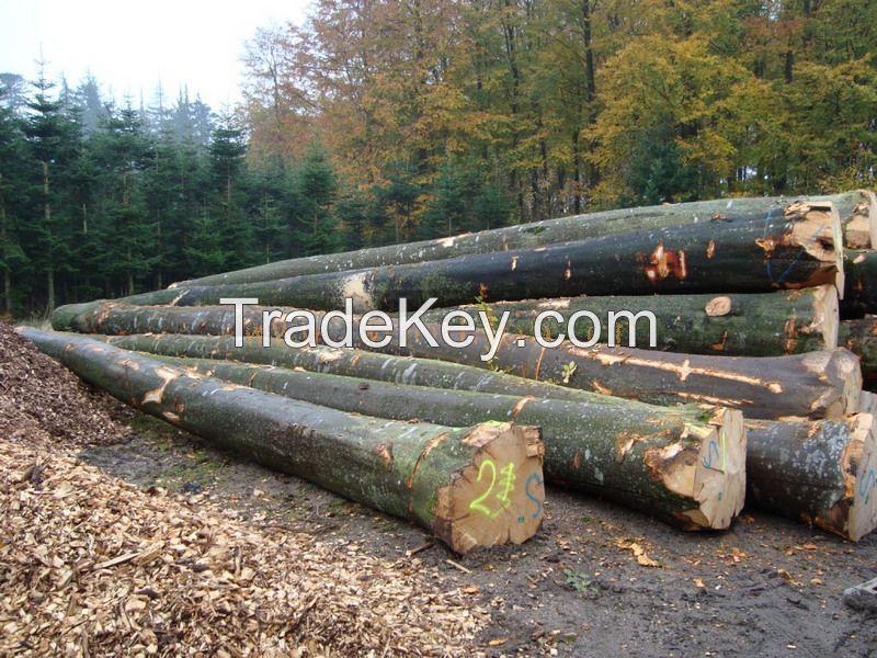 Cheap Birch,Beech,Oak,Pine and Ash Logs