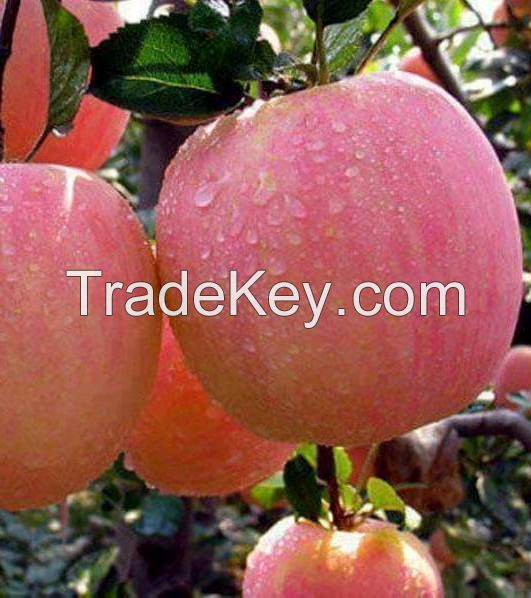 Fresh Apples, Fuji, Gala, Royal Gala, Delicious, crisp red, pink lady, Granny smith, pear, fruits, oranges, citrus, All fruits and vegetables