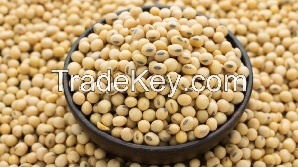 Good Quality Soyabean Seeds for Sale