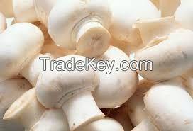 Fresh Real Mushroom