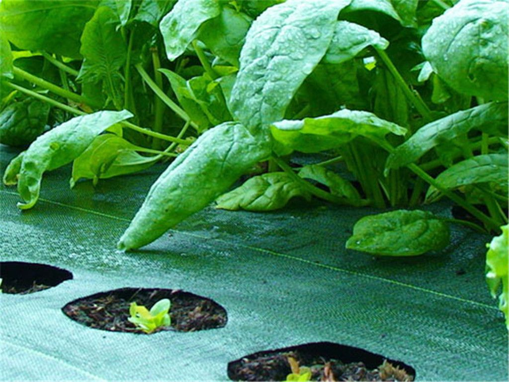 PP Ground Cover | woven ground cover