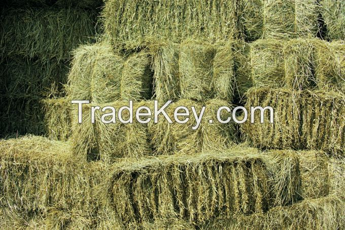 Dehydrated Alfalfa or Alfalfa/Lucerne Hay Bales / timothy hay bales