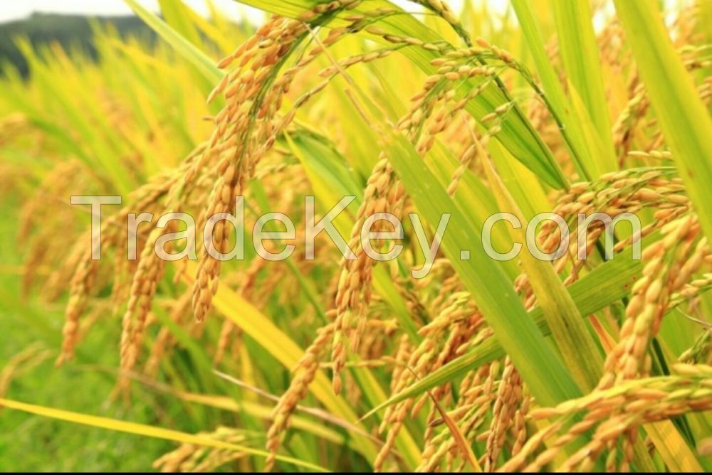 Prime Pishori Rice