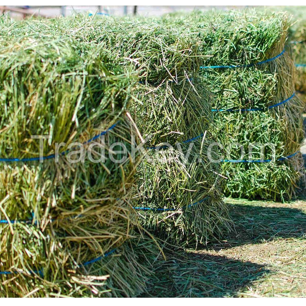 Good quality Alfalfa hay animal feed