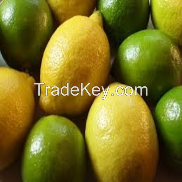 Wholesale price orange king wholesale royal yellow citrus fruit