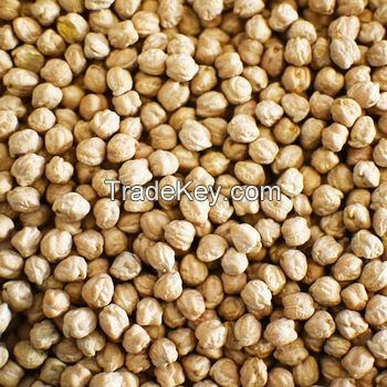 Wholesale Export Chickpeas