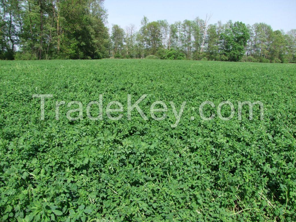 Alfalfa hay in bales production in Croatia