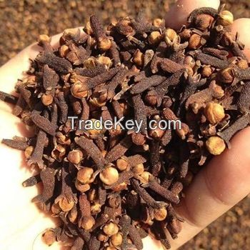 100% QUALITY RAW CLOVES For Sale