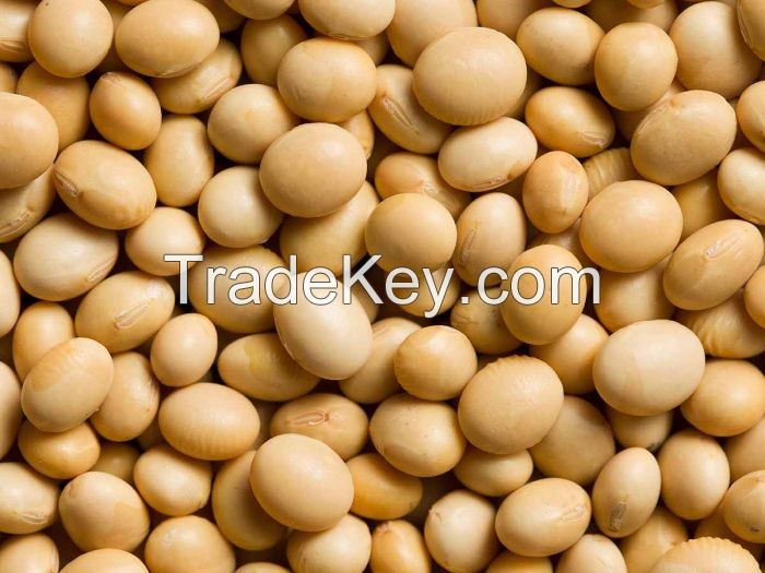 High Quality Rich Yellow Soy Bean