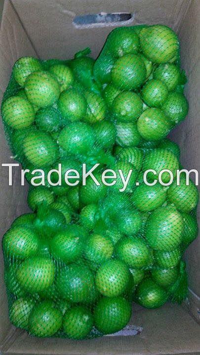 Fresh Lime/ Fresh Lemon for export