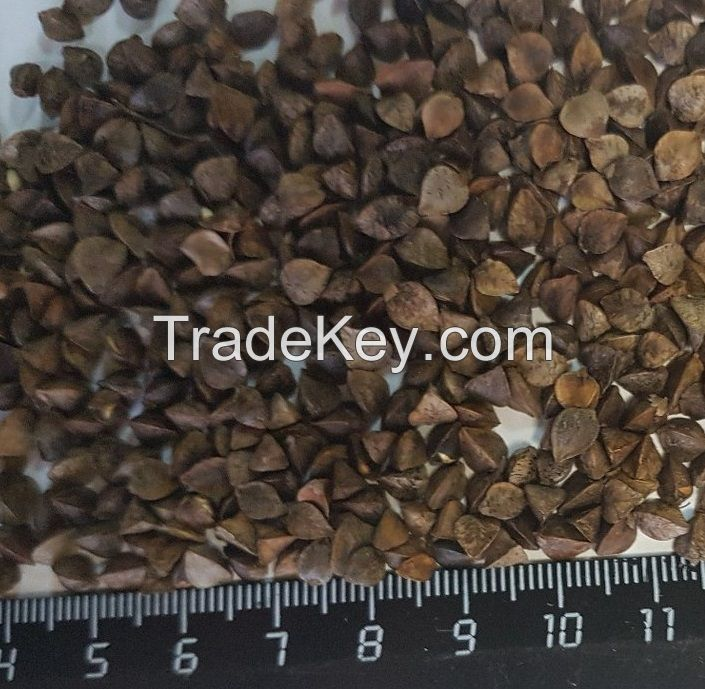 High Quality Certified Buckwheat