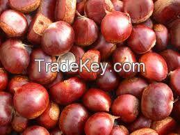 2018 new crop fresh chestnut