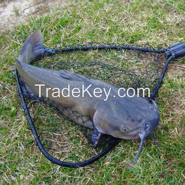 Bioclean Aqua Fish