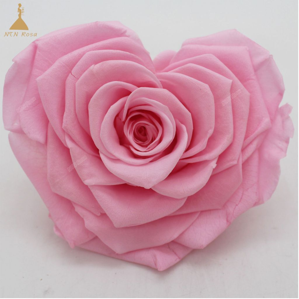 Factory Supply Best Selling Red Preserved Roses