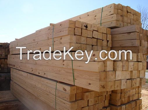 Pine wood logs and timber