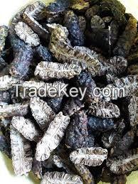 Hot Sale Dried Noni/Noni Fruit high quality cheap price VietNam