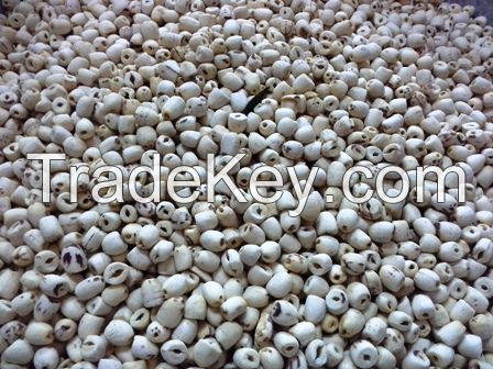 Vietnam Rich Nutrient Dried White Lotus Seed-100% natural