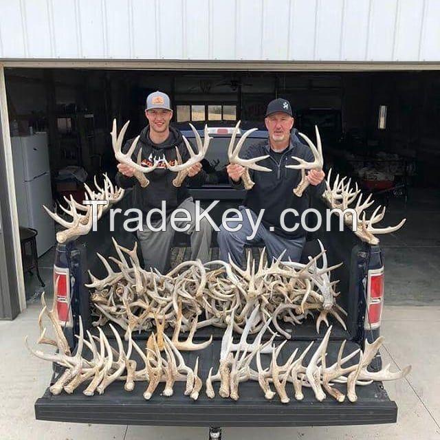Red Deer Antlers | Fallow deer Antlers | Roe deer antlers