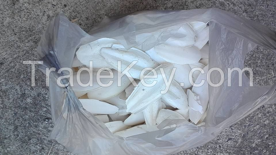 Dried Cuttle-Fish Bones