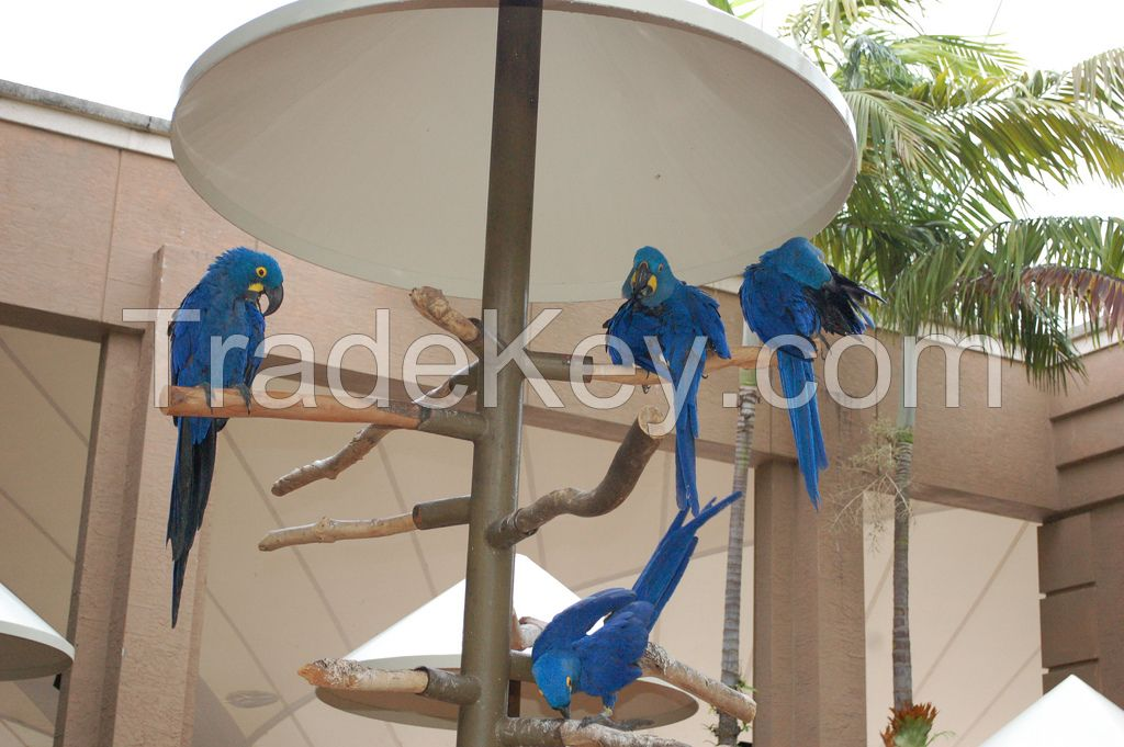 Hand raised Parrots And Fresh Laid Fertile Eggs For Sale.