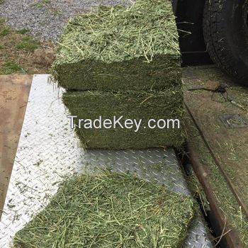 Premium Grade A Alfalfa Hay, Timothy Hay , Animal feed