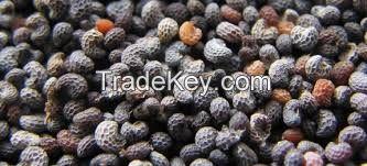 Blue Poppy Seeds (Best Quality), wheat poppy seeds, Sesame seeds