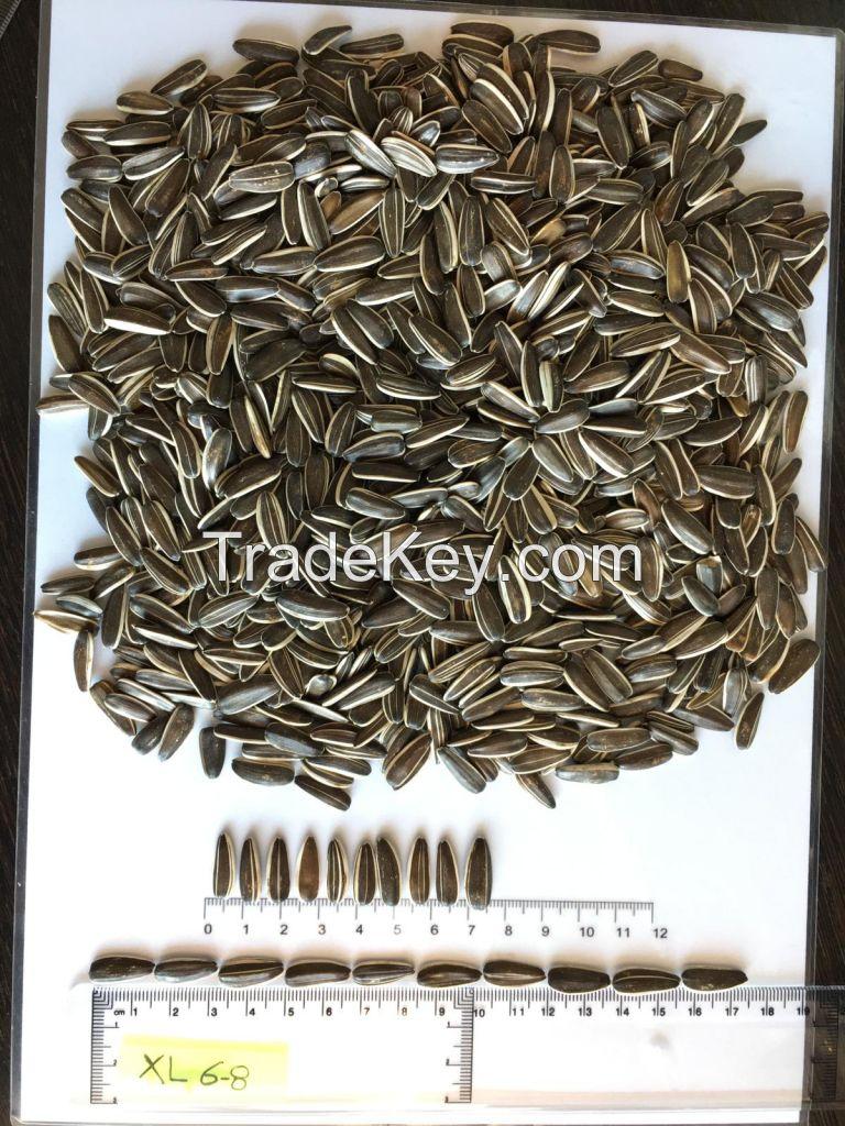 Striped sunflower seeds Jaguar XL