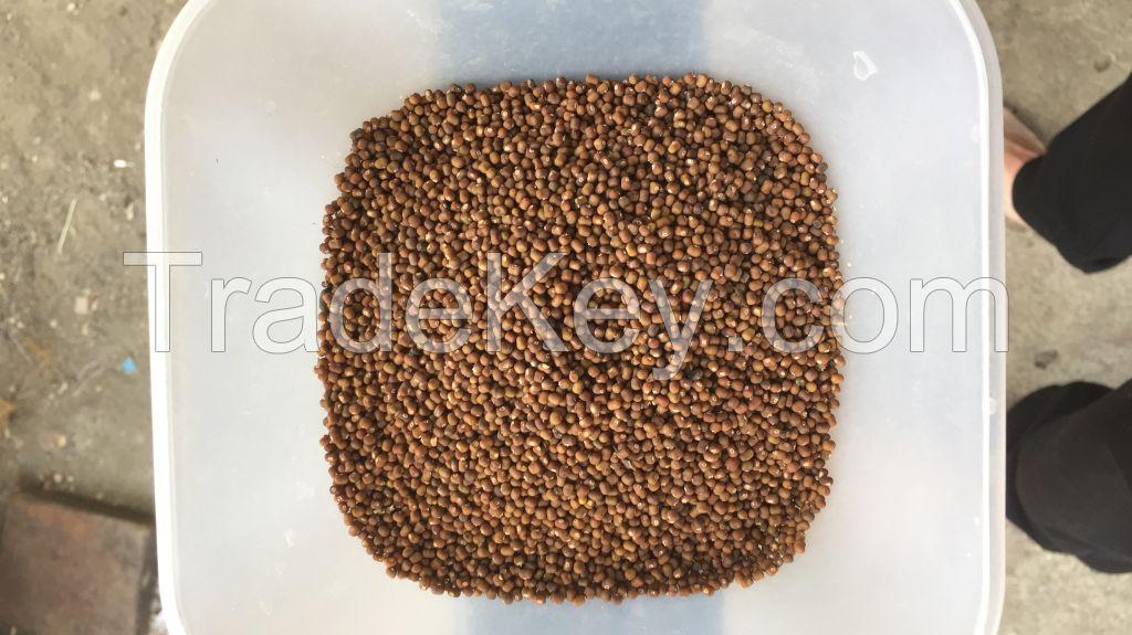 Pueraria Javanica seeds