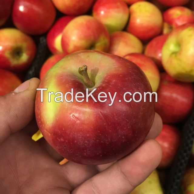 Red Fuji apple- Golden Delicious, and Royal Gala apples for sale