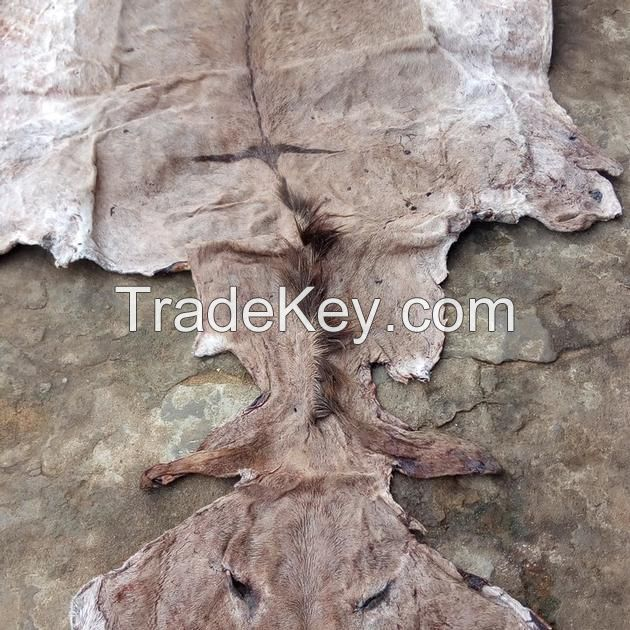 Wet/Dry Salted Donkey Skin/Hide