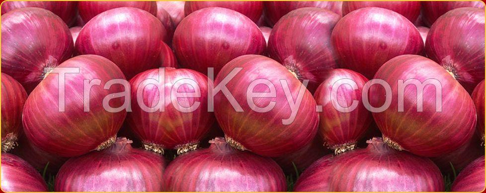 organic fresh onions