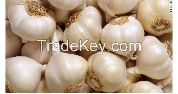 organic fresh white garlic