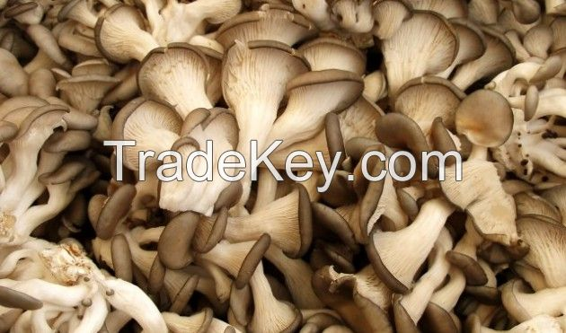 factory price raw oyster and botton mushroom whole