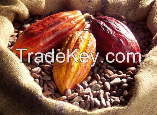 Dried Raw Cocoa Beans