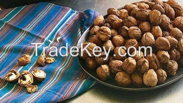 High Quality Organic Health Benefits Halves Walnut Kernel Without Shell