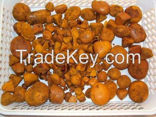 Stock Available for Ox   Cow   Cattle   Gallstones